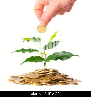 Grüner Baum wächst aus der Münzen - Stockfoto