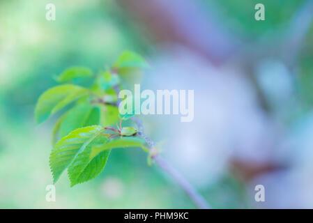 Makroaufnahme von grünen Blatt - Stockfoto