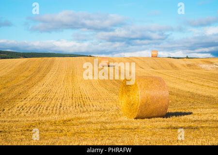 Strohballen auf abgeernteten Feld. Palencia Provinz Castilla Leon, Spanien. - Stockfoto