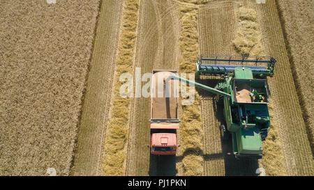 Mähdrescher bei der Arbeit ernten Feld Weizen. Luftaufnahme Mähdrescher mäht reif Ährchen, Gerste, Roggen. Harvest Mähdrescher reifen Weizen auf einem Bauernhof. - Stockfoto
