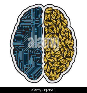 Linken und rechten Teil des menschlichen Gehirns - Stockfoto