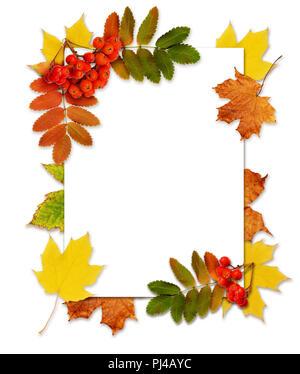 Herbst Vogelbeeren und Blätter in einer Ecke mit einem Frame auf weißem Hintergrund - Stockfoto