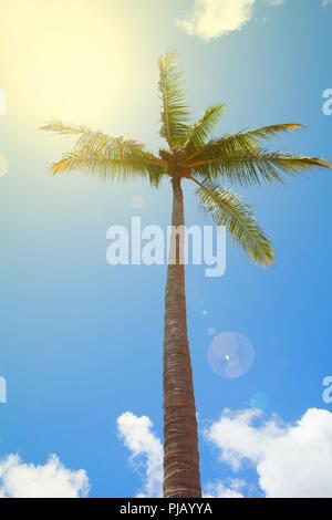 hallo sommer hintergrund tropischer palmen bl tter muster handschrift schriftzug palme. Black Bedroom Furniture Sets. Home Design Ideas