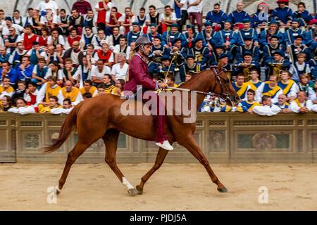 Ein Jockey und Pferd auf der Strecke, Piazza Del Campo, Palio di Siena, Siena, Italien - Stockfoto