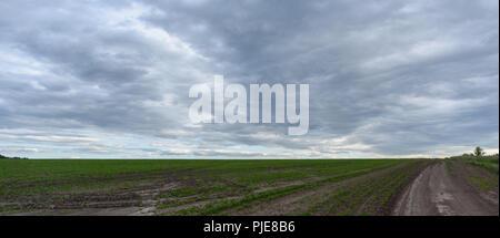 Panorama ländlichen Sommer Landschaft mit einer Strasse, Feld und Wald. Sommer Tag, blauer Himmel mit weißen Wolken. Ländliche Weg. Panoramablick. Stockfoto