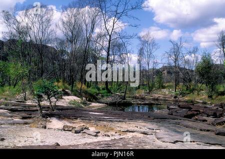 Einen kleinen Busch, der aus einem Felsen riss - Stockfoto