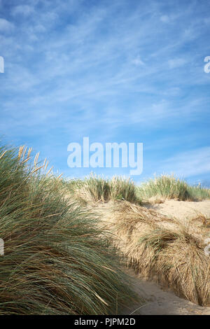 Sunlit Sanddünen in Gräsern vor blauem Himmel bedeckt, Sommer - Stockfoto