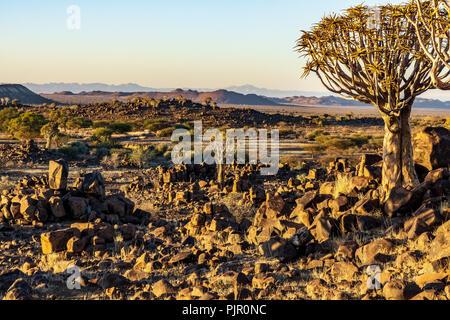 Quivertree Landschaft Sonnenaufgang namibia Wüste Afrika morgen - Stockfoto