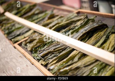 Algen ist auf einem Strand in Kurihama, Kanazawa Präfektur, Japan am 30. April 2009 getrocknet. Kollektiv als kaiso in Japanischen bekannt, Japan hat fünf Arten o - Stockfoto
