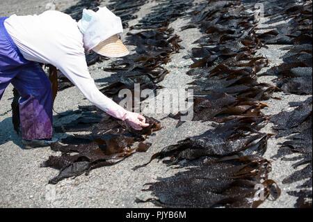 Fischerei Laienmitarbeiter aus Geernteten Algen am Strand in Kurihama, Kanazawa Präfektur, Japan am 30. April 2009 zu trocknen. Zusammen bekannt als kaiso I - Stockfoto