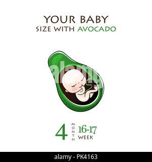 Phasen der Entwicklung der Schwangerschaft, die Größe des Embryo für Wochen. Menschlichen Fötus im Mutterleib 1 bis 9 Monaten. Vektorgrafiken - Stockfoto
