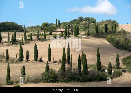 Eine Einfahrt, gesäumt mit Zypressen in La Foce, in der Nähe von Montepulciano im Val d'Orcia in der Toskana Italien Europa EU - Stockfoto