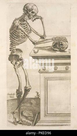 Skelett Abbildung - Stockfoto