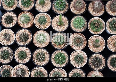 Anzeige der kleinen kaktus kakteen topf topfpflanzen t pfe for Kleine mucken in topfpflanzen