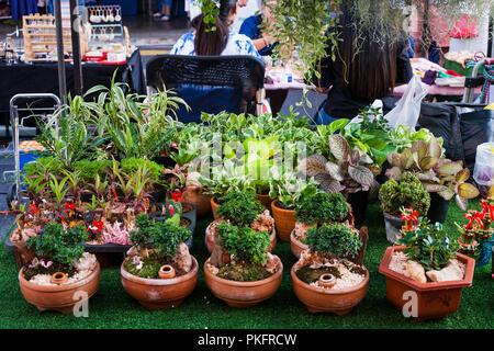 Anzeige der bonsai b umchen zum verkauf stockfoto bild for Kleine mucken in topfpflanzen
