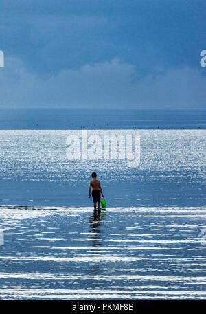 Junge erforscht die flachen Gewässer mit einer Schaufel in der Hand, Skaket Beach, Cape Cod, Massachusetts, USA. - Stockfoto