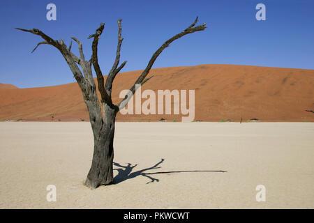 Ansicht der Namib Wüste bei Sossusvlei, ein Salz und Lehm von hohen roten Sanddünen, im südlichen Teil der Namib Wüste umgeben Pan.