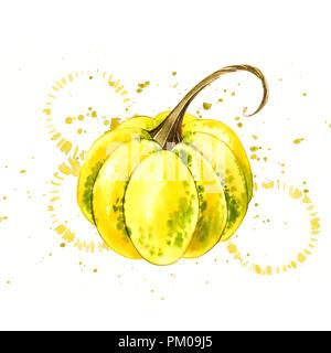 Kürbisse. Hand Aquarell auf weißem Hintergrund mit Splash gezeichnet. Herbst Gemüse - Stockfoto