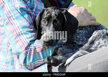 Ein Mann in einem Plaid blue Jacke ist mit einer kleinen schwarzen Welpen Deutsch Kurzhaar Pointer, kurtshaar, Hund hat traurig und erschrockenen Augen, sucht Schutz - Stockfoto