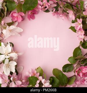 Festliche Blume apple tree Zusammensetzung Grenze auf der Pastell rosa Hintergrund. Ansicht von oben - Stockfoto