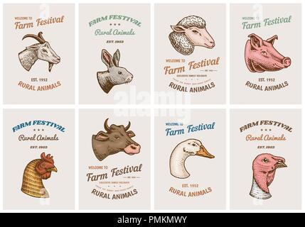 Nutztiere Karten. Kopf von einem Hausschwein Ziege Kuh Kaninchen Schafe. Vintage Vorlage Logos und Embleme für Schild. Einstellen der Plakate für das Menü. graviert Hand in alte Skizze gezeichnet - Stockfoto