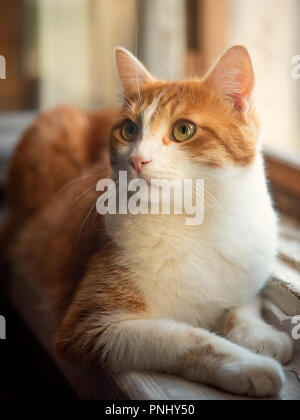 Schöne rote Katze sitzt auf einem Fenster - Stockfoto