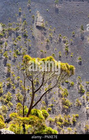 Blick in den Krater des Vulkans Sant Antonio in La Palma, Kanarische Inseln - Stockfoto