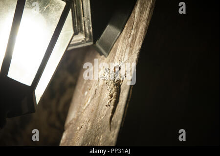 Ein leguan kriecht aus den Schatten von einer Straßenlaterne erstellt - Stockfoto