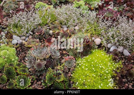 Hohe Betrachtungswinkel von Blumenbeet mit Auswahl von sukkulenten Pflanzen in einem Garten. - Stockfoto