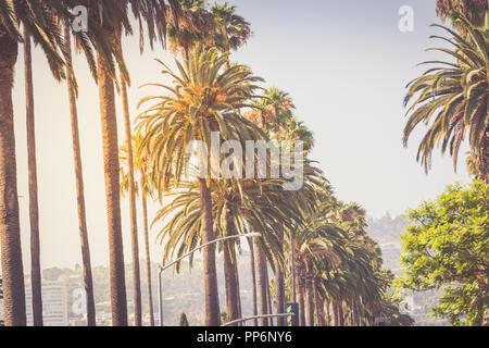 Palmen ov Beverly Hills im goldenen Abendlicht - Stockfoto