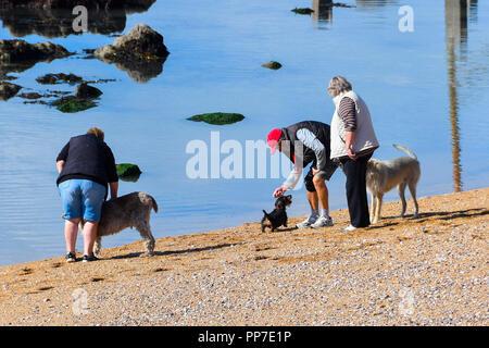 West Bay, Dorset, Großbritannien. 24. September 2018. UK Wetter. Hund Spaziergänger am Strand genießen der warme Herbst Sonnenschein am Strand von West Bay in Dorset nach einem nassen und windigen Wochenende. Foto: Graham Jagd-/Alamy leben Nachrichten - Stockfoto