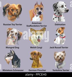 Set aus bunten Vektor Porträts von Hunderassen (Deutsche Pinscher; Russische Toy; Dalmatiner; Welsh Corgi; Jack Russel Terrier; Deutsche Pinscher; Yorkshire - Stockfoto