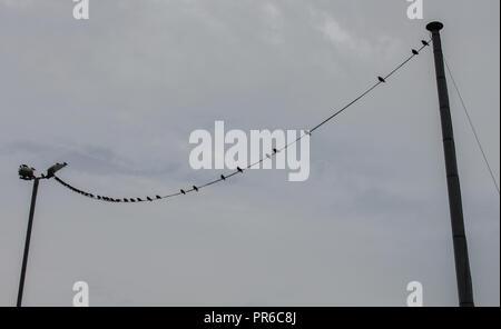 Vogel hängend an elektrischen Draht im Himmel Hintergrund Stockfoto ...
