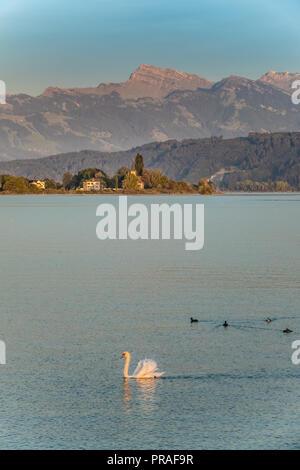 Wunderschöne Landschaften an den Ufern des Oberen Zürichsee (Obersee), Schweiz - Stockfoto