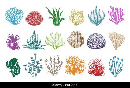 Algen Und Korallen Auf Weiß Farbige Aquarienpflanzen Vector