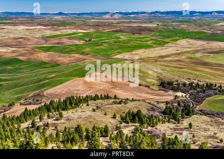 Landwirtschaftliche Felder in der Palouse Hills, Ansicht im Frühjahr vom Gipfel des Steptoe Butte, Columbia Plateau, in der Nähe der Steptoe, Washington, USA - Stockfoto