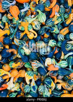 verschiedene arten von k rbissen als saisonale herbst dekoration stockfoto bild 38209928 alamy. Black Bedroom Furniture Sets. Home Design Ideas