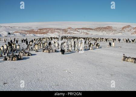 Kolonie, Herde - Kaiserpinguine in der Antarktis. Insgesamt planen - Stockfoto