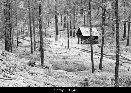 Österreich, Tirol, Lärchenwald in Obsteig, erster Schnee im Herbst - Stockfoto