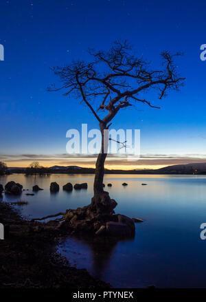 Ein einsamer Baum in Milarrochy Bucht an den Ufern des Loch Lomond, in der Nähe des Dorfes Balmaha, Schottland, Großbritannien. - Stockfoto