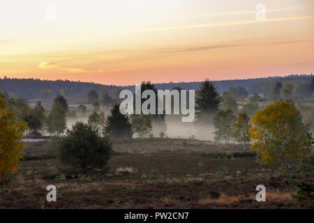 Goldener Herbst in der Lüneburger Heide in der Nähe von Undeloh - Stockfoto