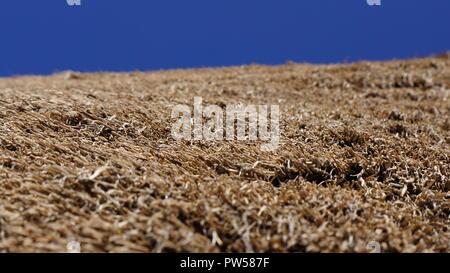 Stroh Stroh Dach Textur Hintergrund vor blauem Himmel - Stockfoto