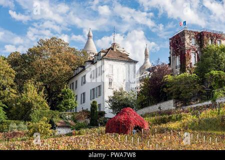 Weinberge im Herbst in Montmartre - Paris, Frankreich - Stockfoto
