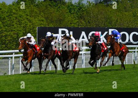 Goodwood Pferderennbahn ist ein Horse-racing Track, 5 Meilen nördlich von Chichester, West Sussex, UK. - Stockfoto