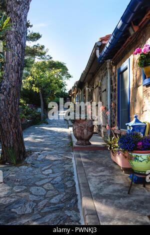 Häuser von Collioure, Pyrénées-orientales, Katalonien, Cote-de-Vermeille, Languedoc-Roussillon, Frankreich - Stockfoto