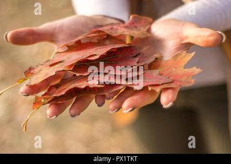 Frau Hände halten trocken gefallenen Haufen Blatt auf schönen Herbsttag im Park. Close Up, selektiver Fokus - Stockfoto