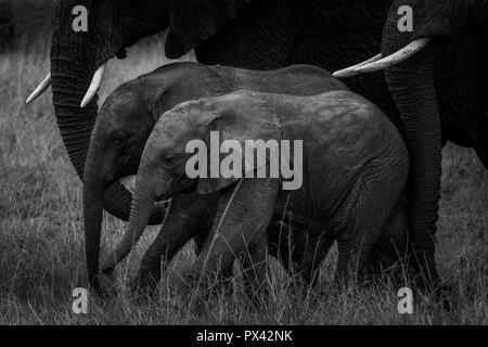 Dieses Bild von Elefanten Familie ist in der Amboseli in Kenia. - Stockfoto