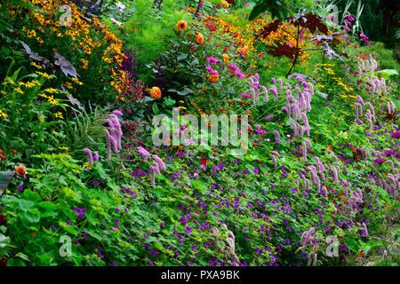 Super Ricinus communis, helenium, Cosmos, Salvia, Tagetes Patula, Mix &KY_56