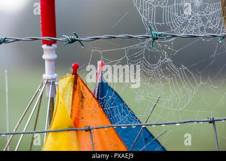 Tau Vom Nebel Auf Spinnen Web Sites Auf Einem Weissdorn In Ambleside