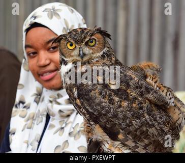 Horned owl auf junge Frauen tragen Kopftuch thront die behandschuhte Hand - Stockfoto
